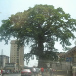 Street-level view of Freetown and the Cotton Tree where former American slaves prayed under and christened Freetown in 1792.